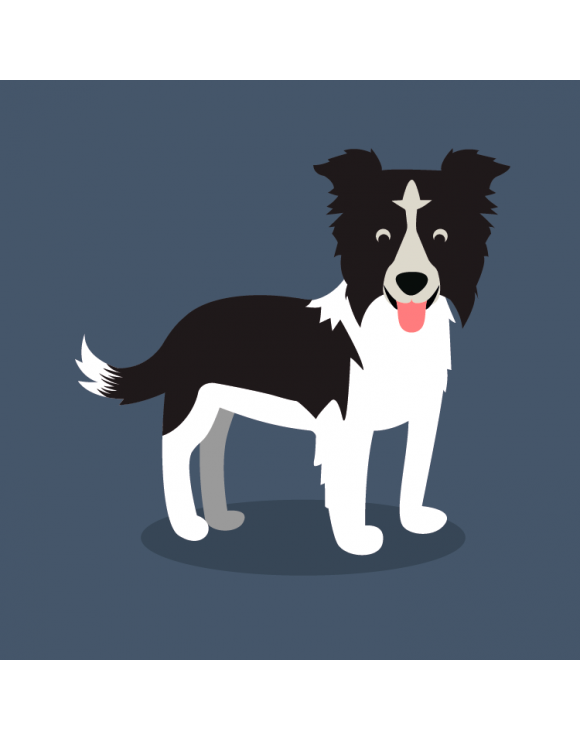 Camiseta perro Border Collie